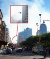 Mothman 9/11 - cryptozoology photo