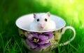 Mouse in a cup  - animals wallpaper