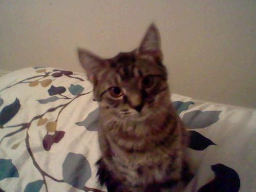 My kittypet