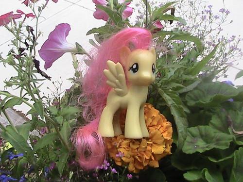 Nature Ponies
