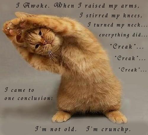 Smiješne slike! :)