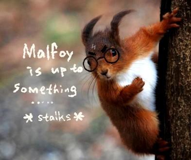 Stalking ardilya Harry