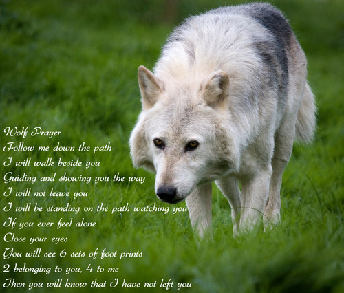 Wolf Prayer Wallpaper