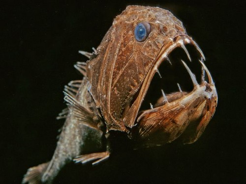 deep sea life wallpaper entitled deep creatures