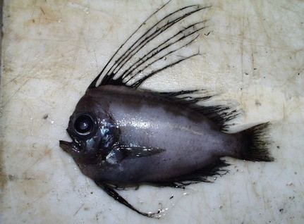 deep sea life wallpaper titled strange but real