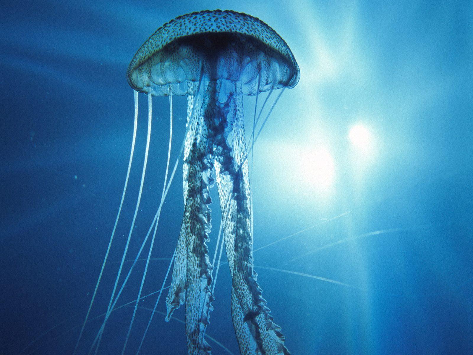 Deep sea life strange but real