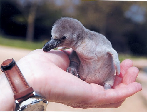Baby otguin?