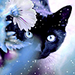 Cat - black-cats icon