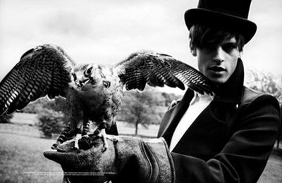elang, falcon