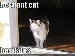 Hesitant cat