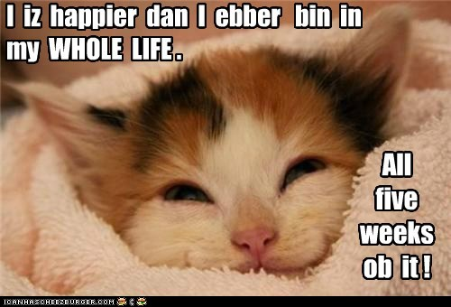 I iz happier dan I ebber bin in my WHOLE LIFE