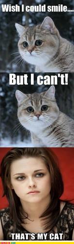 Kristen's Cat