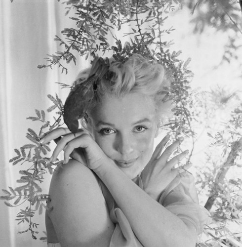 Marilyn Monroe wallpaper containing a bouquet entitled Marilyn Monroe