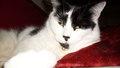 My cat, Monty!! :3