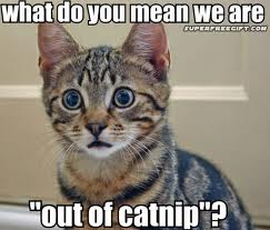 No catnip!