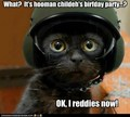 Ok, I reddies now! - lol-cats photo
