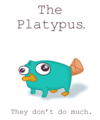 PERRY! - perry-the-platypus photo