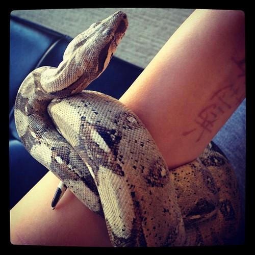 Prince Jackson's new pet snake :)