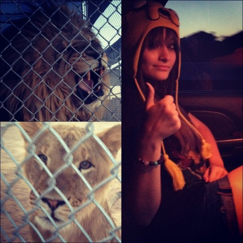 Paris just got peed on  by a lion - paris-jackson Photo