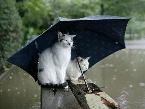 Rain animais