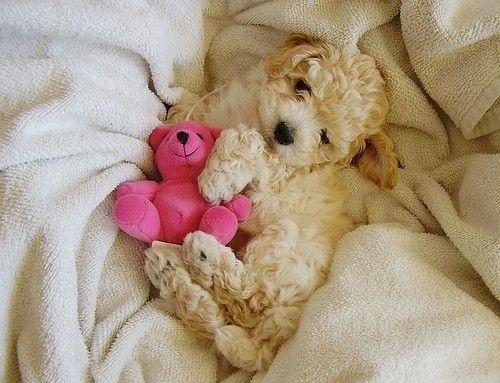 Sweet teddy bears for Anna