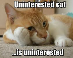 Uninterested cat