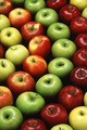 apples - fruit photo
