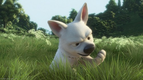 Disney's Bolt پیپر وال entitled bolt