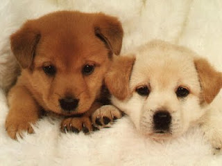 cute puppie pic 1