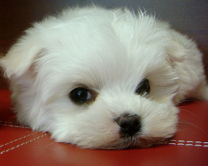 Cute Puppies Pictures on Cute Puppy   The Puppy Club Photo  31132438    Fanpop Fanclubs