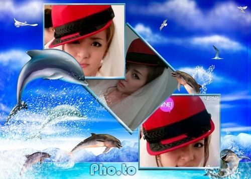 daradolphin