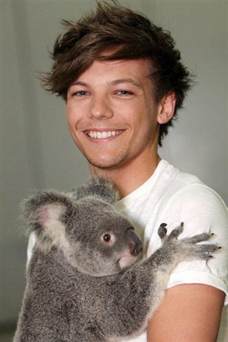 Louis Tomlinson wallpaper containing a koala called louie <3