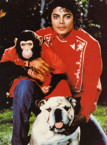 Michael Jackson images michael and his animals HD wallpaper and background photos