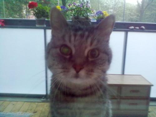 my cat on the balcony:)