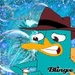peeeery - perry-the-platypus icon