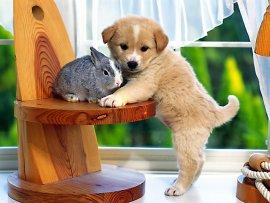 puppie and bunnie