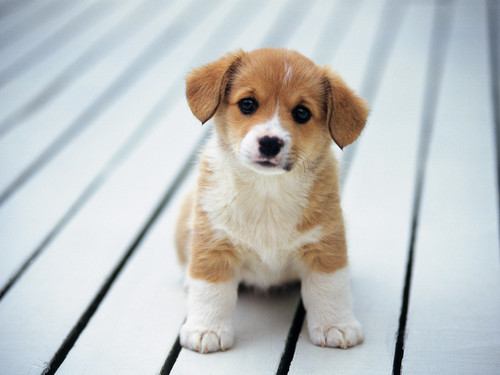 so cute puppy
