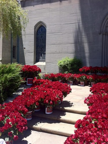 10,000 バラ at Michael's grave at forest lawn, glendale LA june 25th 2012