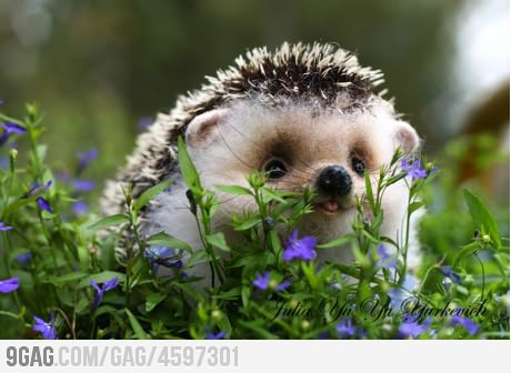 Baby hedgehog! ^-^