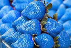 Blue nourriture
