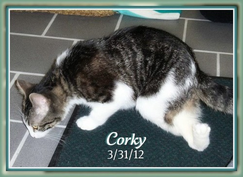Corky(plzz follow the story on FB)