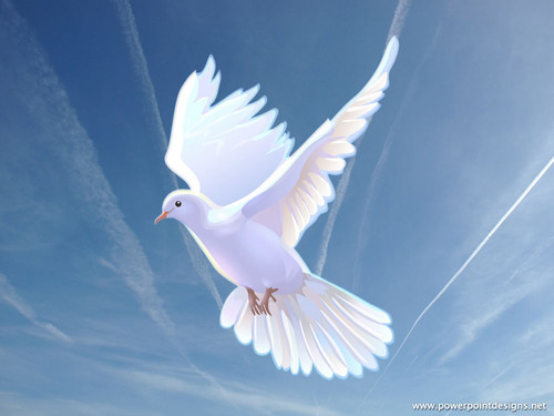 Doves wallpaper entitled Dove