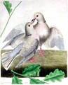 Doves - doves fan art