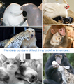 Friendship ANimal