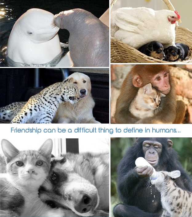 Quotes Friendship ANimal