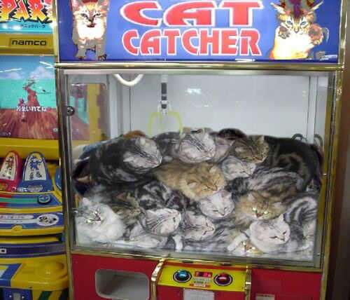 cat games for kids to play