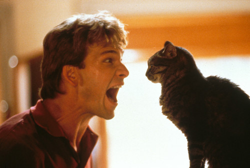 Patrick Swayze wallpaper with a tom, a cat, and a kitten entitled Ghost