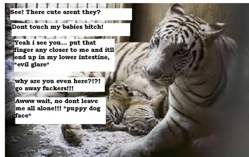 Dream Diary karatasi la kupamba ukuta with a tiger cub and a bengal tiger entitled Mood swing... (Really funny)