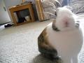 My bunny, Bruno