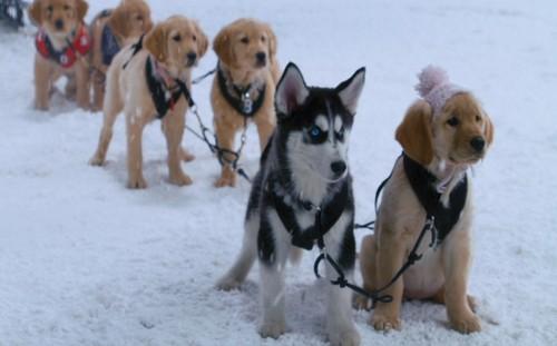 Snow Buddies!